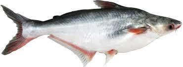 PFA khuyên công dân không sử dụng cá tra đông lạnh