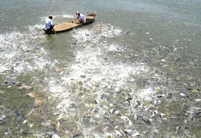 Khóa đào tạo: Ứng dụng phương pháp mới phòng và trị bệnh trên cá Tra